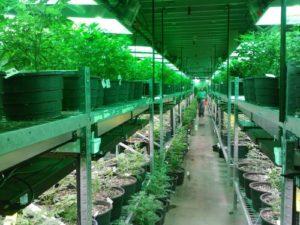 marijuana 269851 1280 min